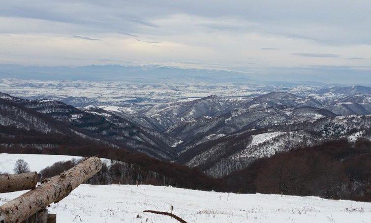 zimo-11