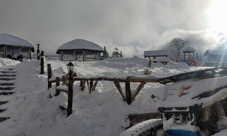 zimo-6